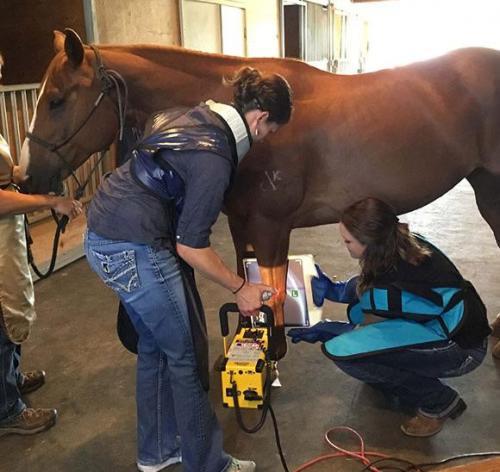 horse xray